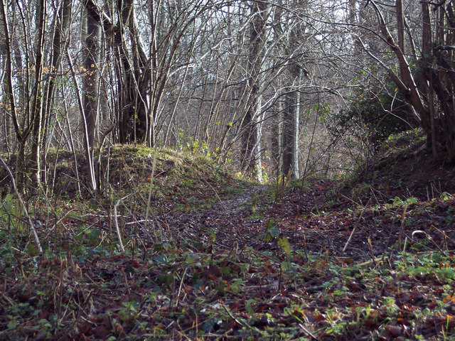 Woodland path into Odstock Copse