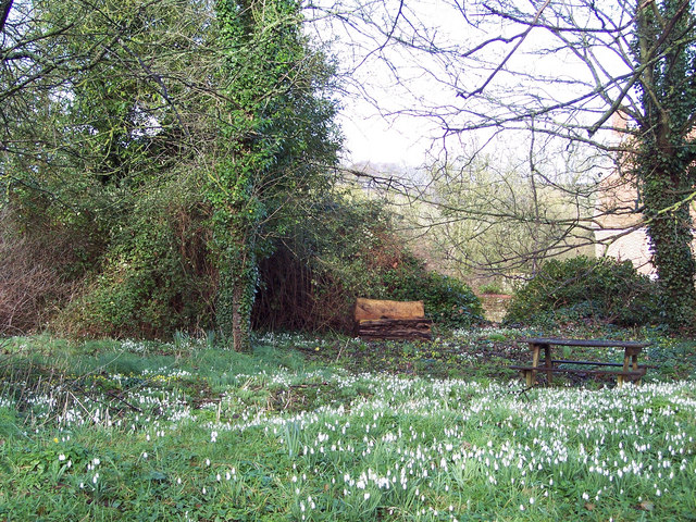 Picnic table amongst the snowdrops in Homington