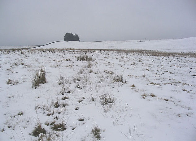 Rough grazing south of Drinkstone Hill