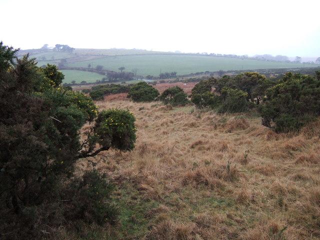 Shaugh Moor