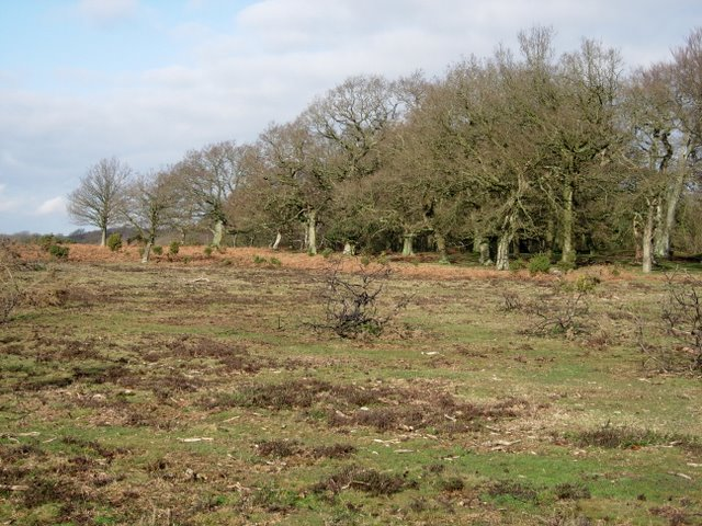 Yew Tree Heath