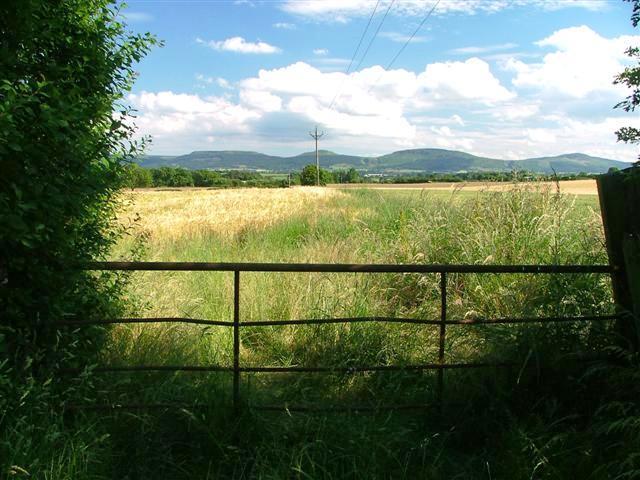Gate, Tunstall Lane
