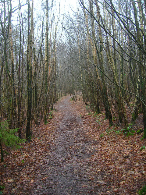 Footpath through Milldown Wood