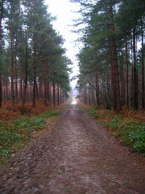 Main Track, Bixley Wood