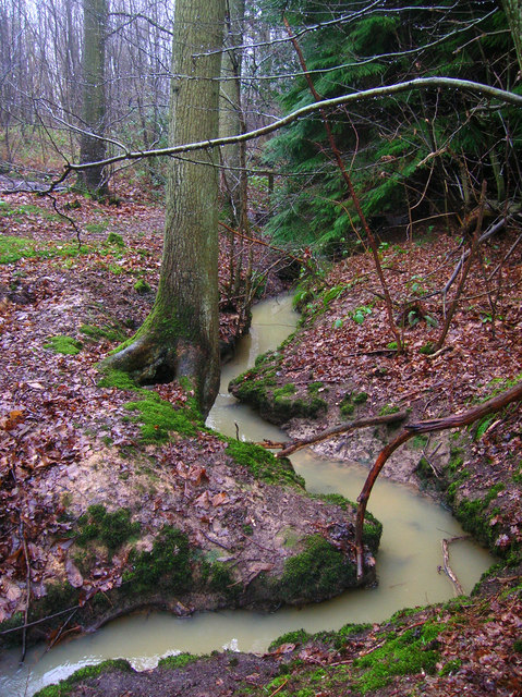 Unnamed Stream, Milldown Wood