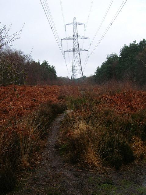 Electricity Pylons, Flatroper's Wood.