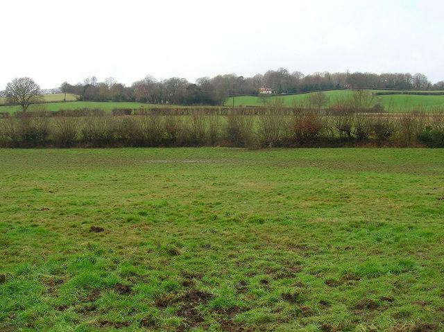 Hedged Fields near Birds Farm