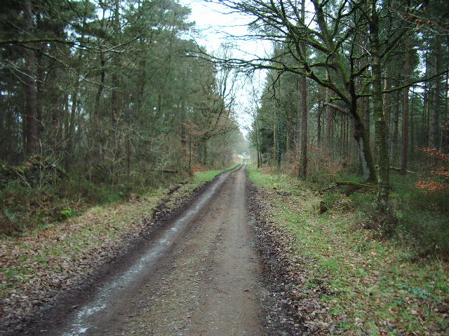 Forestry road in High Stand Plantation
