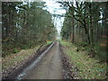 NY4849 : Forestry road in High Stand Plantation by Alexander P Kapp