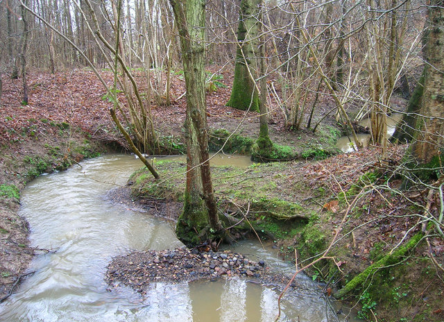 Unnamed Stream, Ten Acre Wood