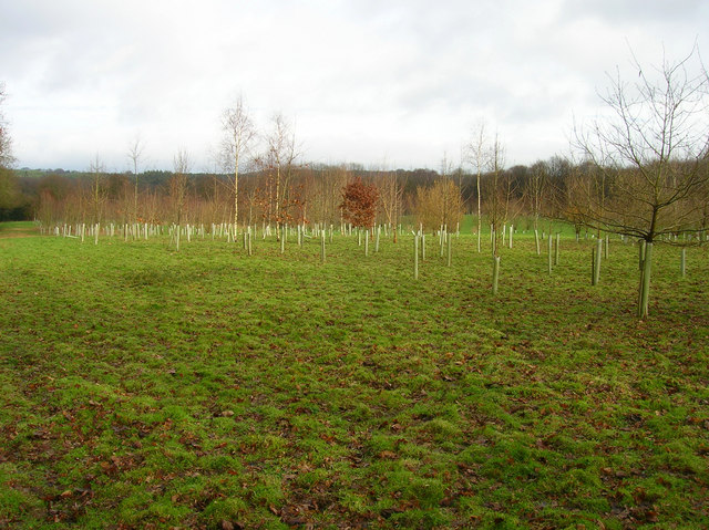 New Plantation, Birds Farm