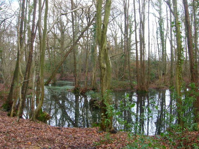 Pond, Cherrytree Shaw