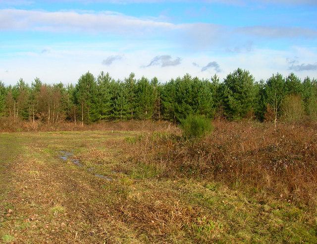Dinglesden Wood