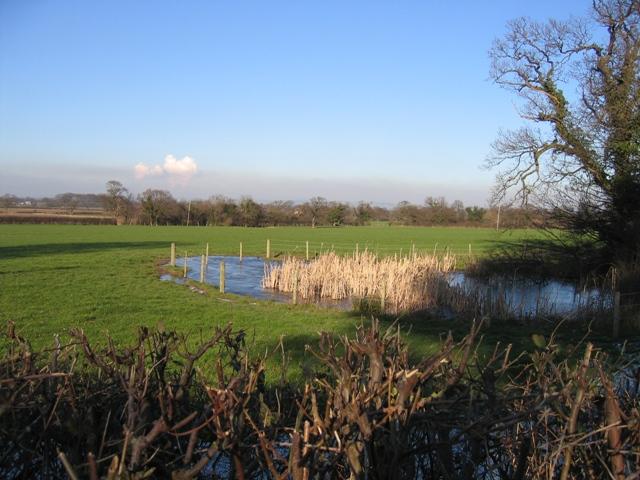 Pond by Dark Lane