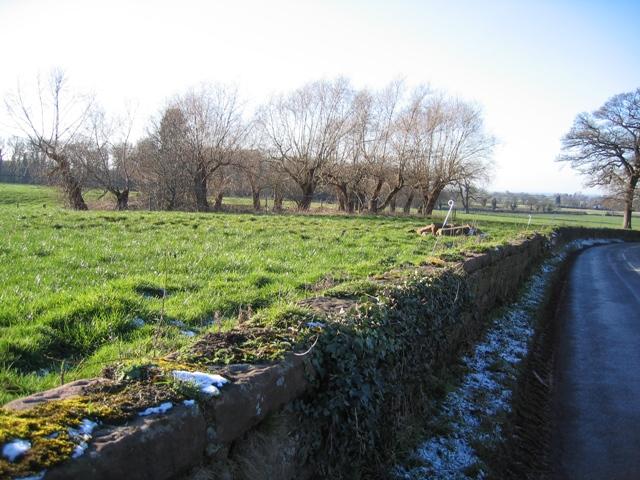 Pond and Willows at Bolesworth