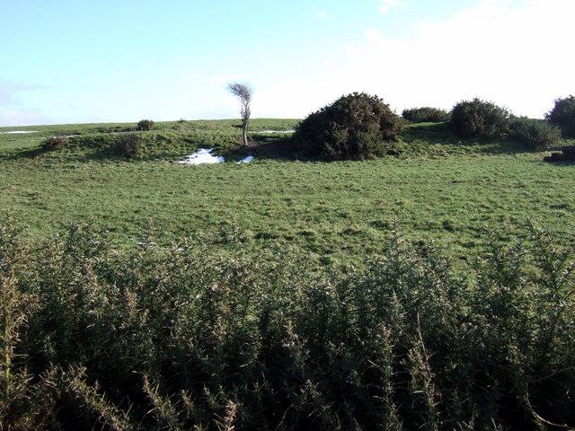 Earthwork near Trewyddel/Moylgrove