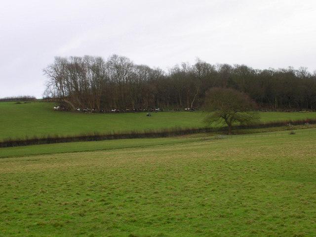 Anyone Seen the Hounds? Pelsham Wood