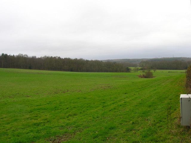 Rockfield Plantation
