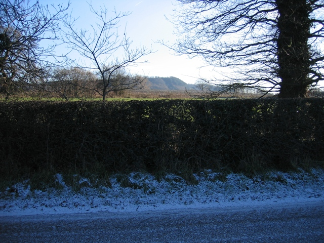 Hedge and View across Dark Lane