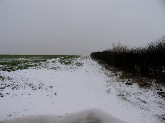 Snowbound field/hedge boundary