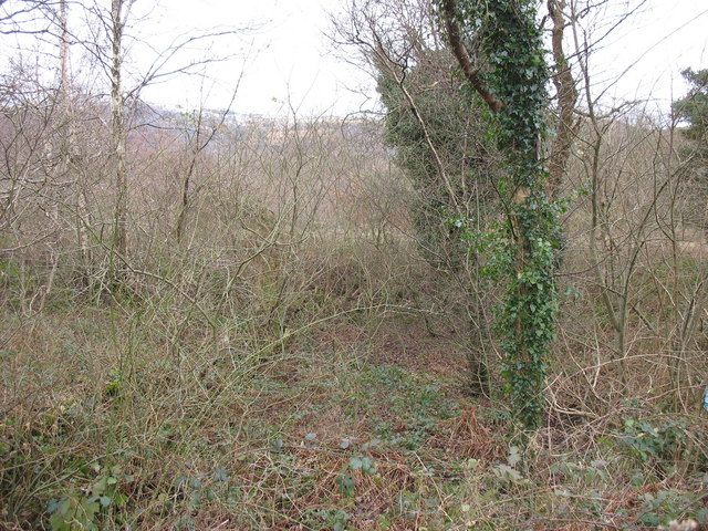 Brambles and thickets at Cae Doctor Nature Reserve