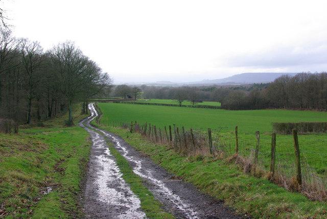 Track to Sparrwood Farm