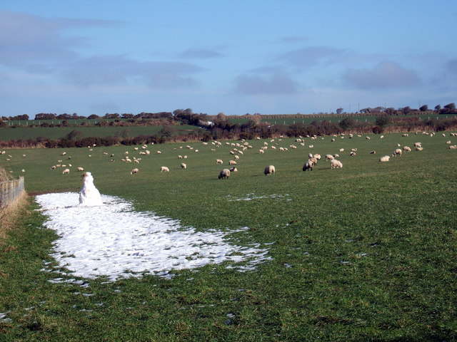 Snowy shepherd?