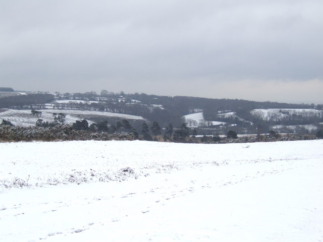 Ashdown in winter