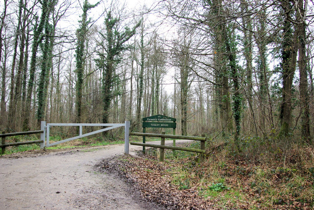 Entrance to Tugley Wood, Fisher Lane