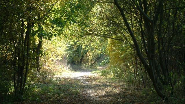 An Autumnal Stroll