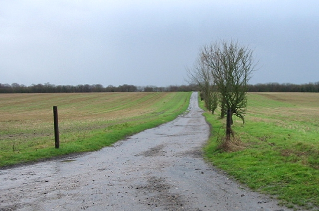 View along farm track to Ileden Woods