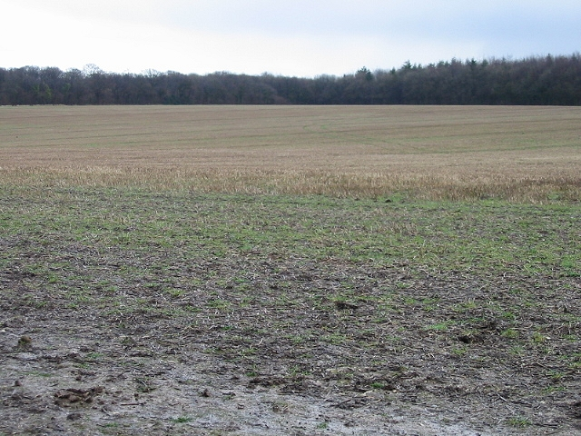 Field of stubble looking towards Ileden Woods