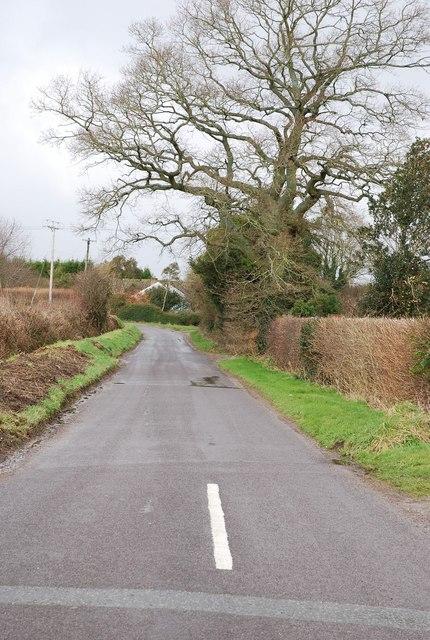 Lane in Swallowcliffe