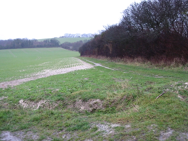 Looking NW along field boundary