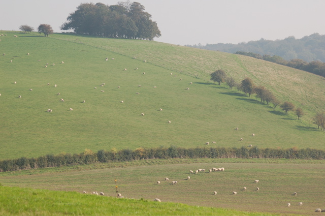 "Chiltern Hills - pasture viewed from the ""King William"" PH, Hailey"