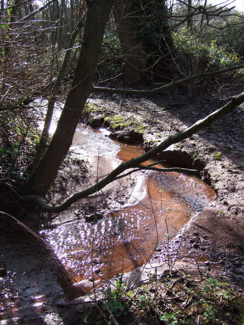 Woodland stream at the Willows