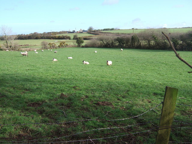 Another field with sheep