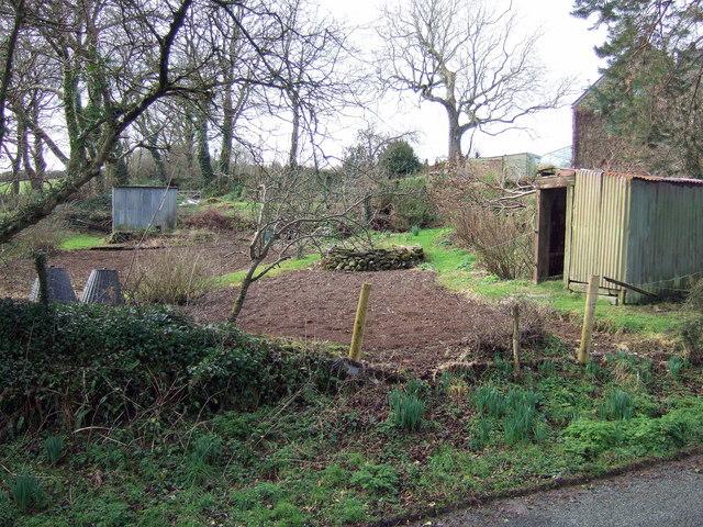 Vegetable plot in winter