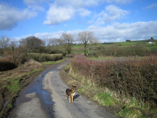 Road From Hardington Marsh
