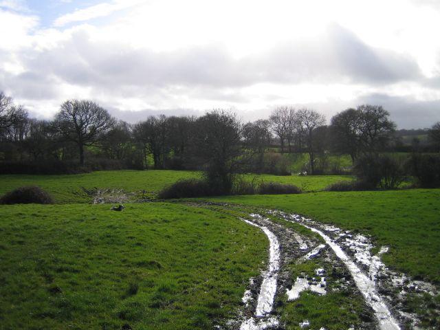Soggy Fields