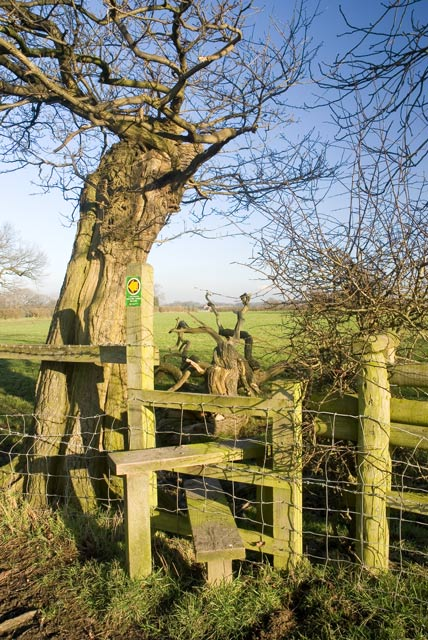 Stile and Fallen Tree