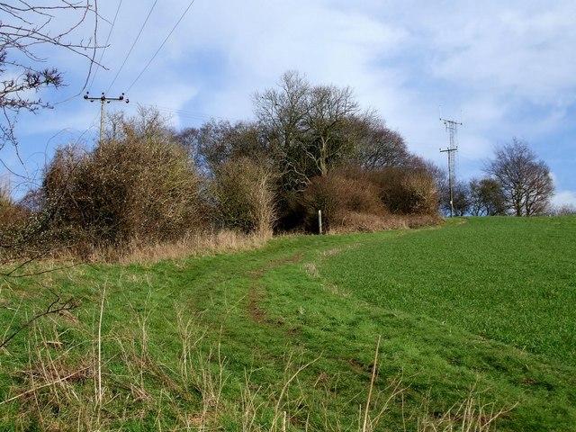 Looking towards Ravensdell Wood