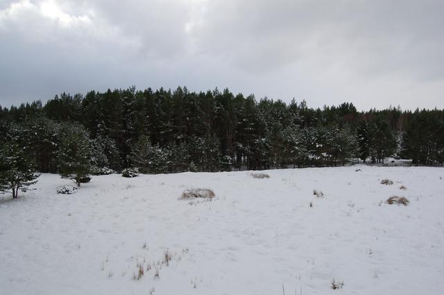 Baddengorm