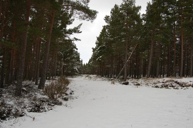 Track in Baddengorm Woods