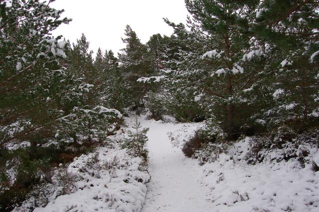 Path at Loch an Eilein