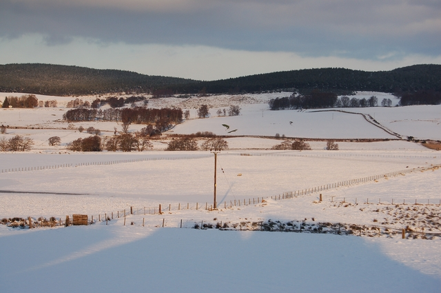 Snow covered fields at Mains of Garten Farm