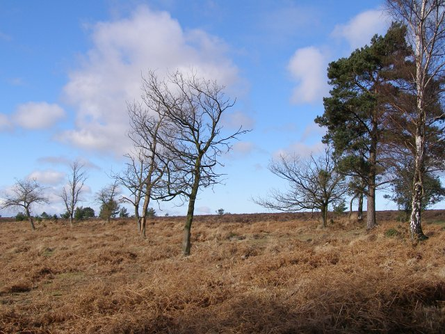 Cleared area in the northeast corner of Milkham Inclosure, New Forest