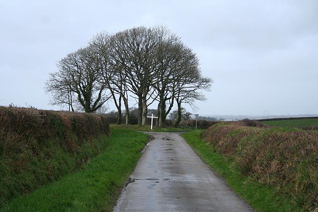 Sampford Courtenay: near Bondleigh Moor