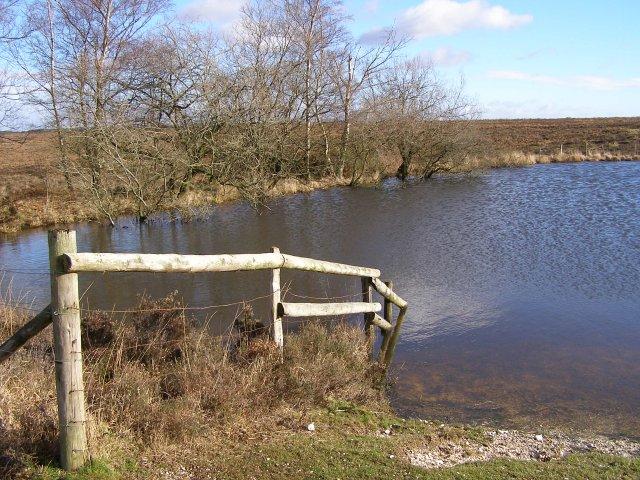 Fence at Broomy Pond, Broomy Plain, New Forest