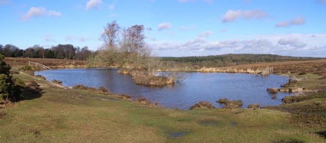 Broomy Pond, Broomy Plain, New Forest